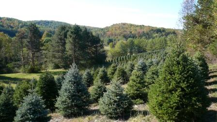 www.njchristmastreefarm.com